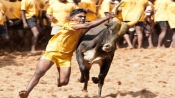 Jallikattu: Bull tamers gear up to put good show for Pongal 2020, here are some interesting facts