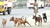 Experts say coronavirus lockdown leading to subtle behavioural changes in stray dogs