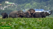 Human-elephant conflict: A deadly battle over ever decreasing land