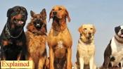 Can pet animals spread coronavirus?