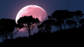 What is a Super Pink Moon? Catch the brightest full moon in India on 8 April at 8.05 am