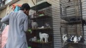 Hundreds of abandoned animals die at Pak pet markets