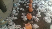 Bird flu scare: Samples taken from Ghazipur market tests negative