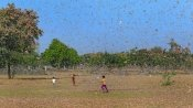 Locusts swarms reach Nagpur, drones used to spray pesticides