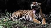 Row over beef in zoos: Need to provide wild animals food as per diet chart, says Assam minister