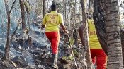 Odisha govt says forest fires totally contained and controlled