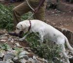 Bangalore Blast- Dog Squad