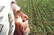 6 farmers commit suicide in Vidarbha