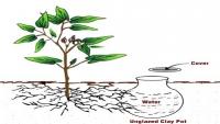 PM Modi would use to plant the Parijat