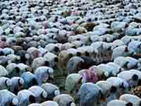 Muslims Eid prayer