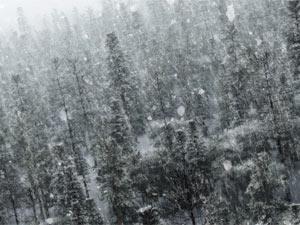 Snowfall in JK