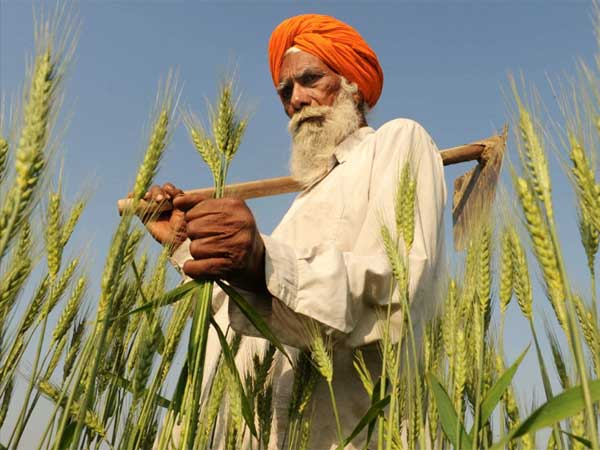 Indian Farmers' Woes Continue