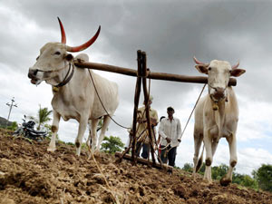 Maha sets aside Rs 2,685 cr for drought