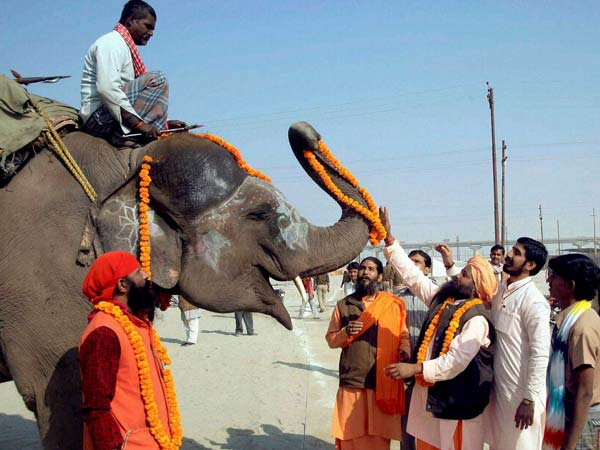 Group of sadhus performing worship of an Elephant