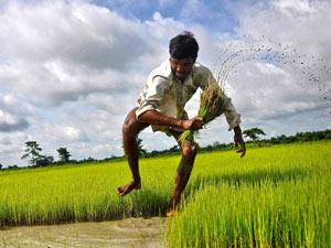 farmer-paddy