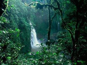 OTCA: Protect Amazon rain forest