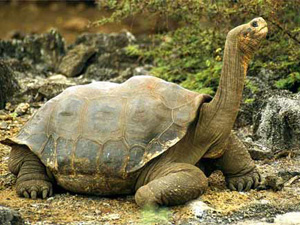 Britain's oldest tortoise passes away