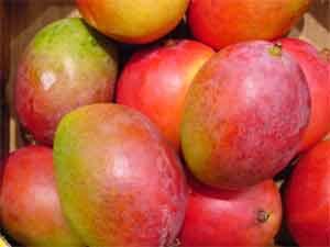 New mango named Nirbhaya after gang-rape victim