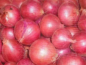 WB Govt plans to achieve self-reliance in onion production