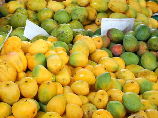 Bihar's mangoes, litchis gifts to VIPs