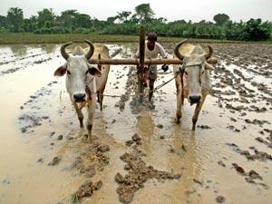 Farmer Rain