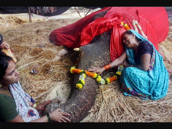 Caretaker mourns the death of Bijli the elephant