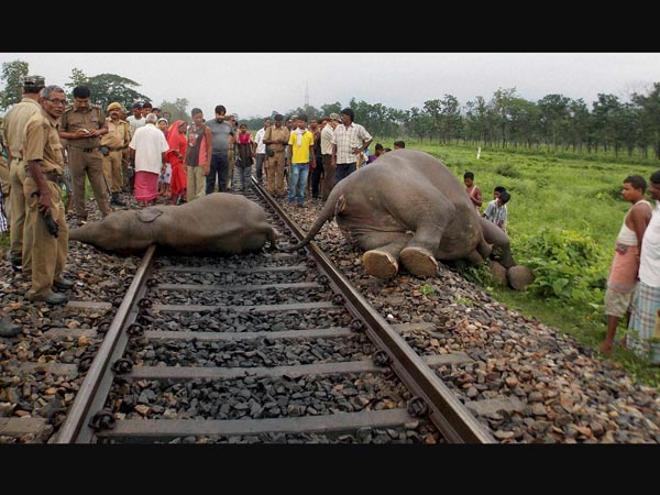 Three elephants killed after being hit by a speeding train