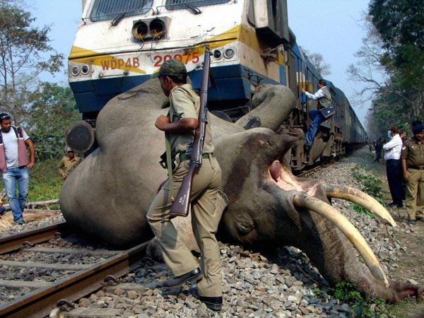 Elephant was struck by a train