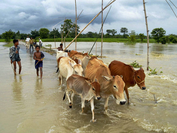 Boys and cattle wade through flood waters in a village