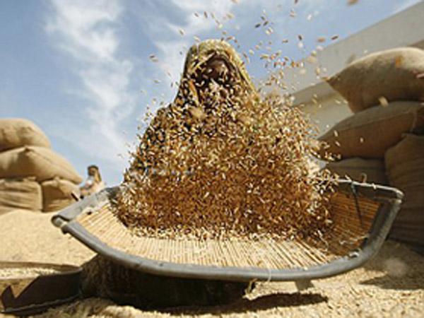 India's grain production drops
