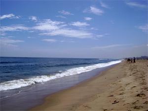 Beach sand mining would impact N-plants