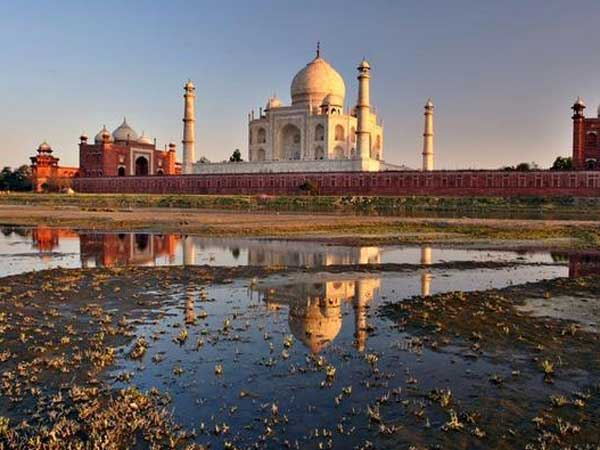 Green thieves on the loose in Agra