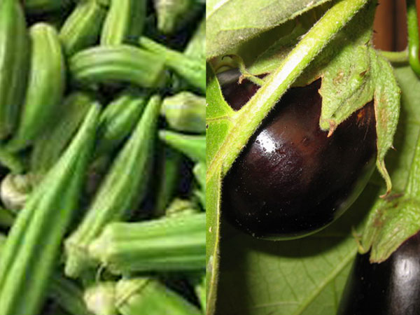 TN:Lady's finger, brinjal prices decline