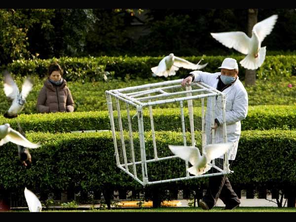 New bird flu strain found in China