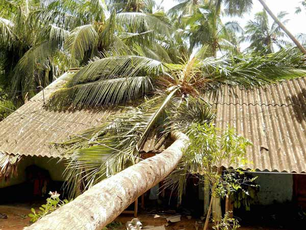 Cyclone Phailin: Congress hails efforts