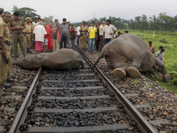 elephant-deaths