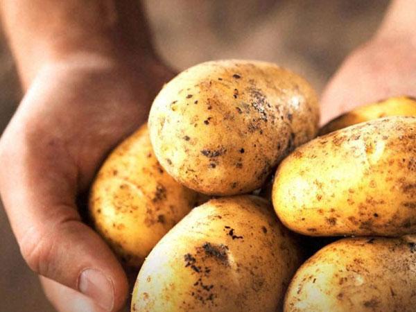 Delhi: BJP promises cheap vegetables