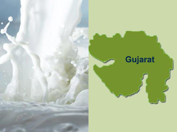Baroda's milk procurement reaches summit
