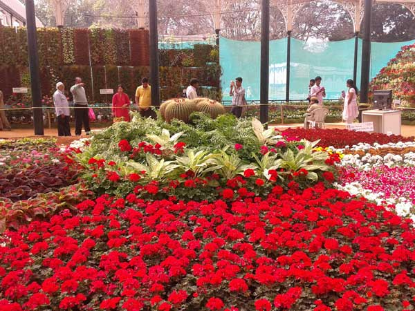 Flowers galore at Lalbagh