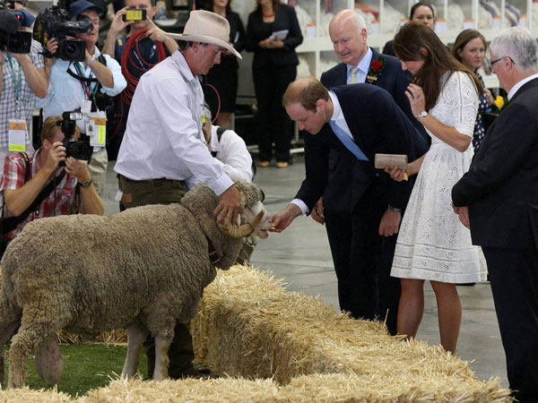 Britain's Prince William, center right, feeds a ram while his wife