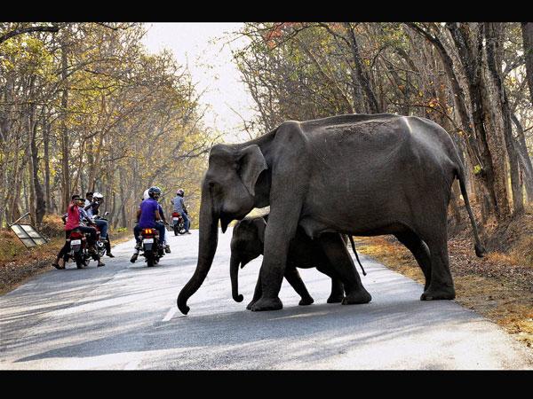 Regulated vehicle movement in Kaziranga
