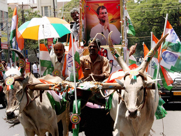 Congress party flags during an election campaign