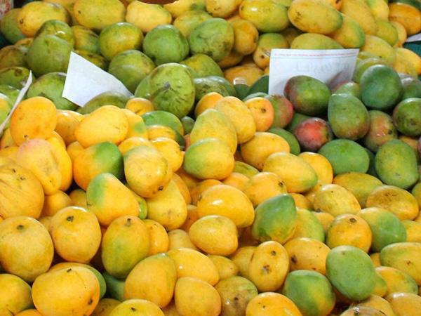 narendra modi, uttar pradesh, lucknow, mango