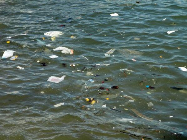 Trash concentration in ocean dangerous