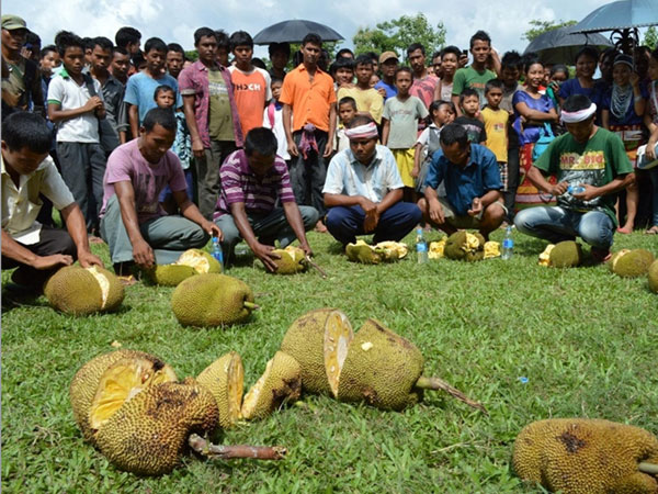 A jackfruit eating competition underway on the Day -1