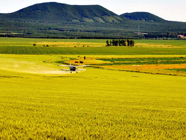 A plane sprays nutrient solution on wheat