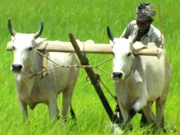 Kisan Tv To Provide Real Time Information On Agriculture