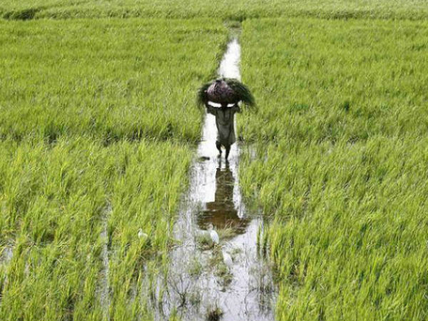 Agriculture contributes 14 per cent to the GDP