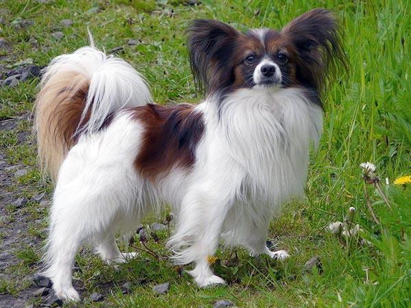 rajasthan, jaipur, police, puppy, dog