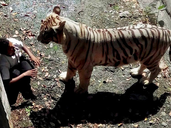 (Pic) Youth killed by tiger in Delhi Zoo